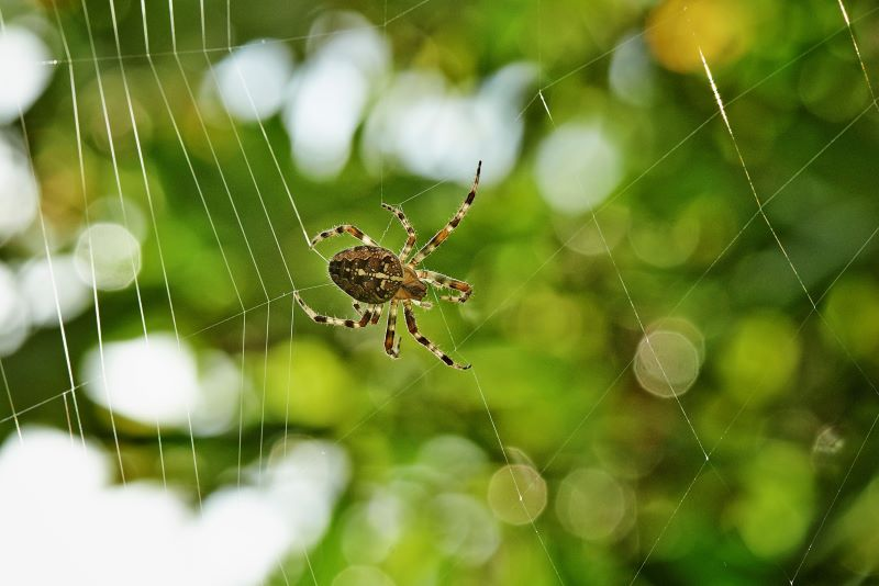 Is the Dark Web a Threat for my Business?